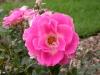 Garden Flowers 8