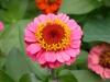 Garden Flowers 12