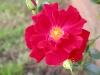 Garden Flowers 14